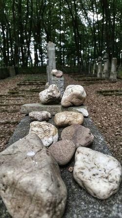 Jewish Cemetery Cemetery Jewish Jewishcemetery Jewish Culture Grave Graves Gravestone Memorial