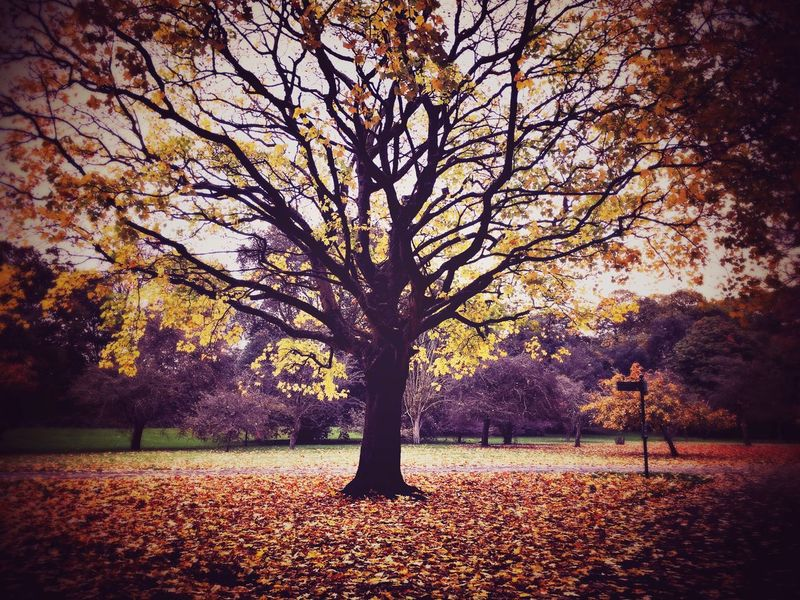 Autumn colours Autumn Autumn Colors Trees