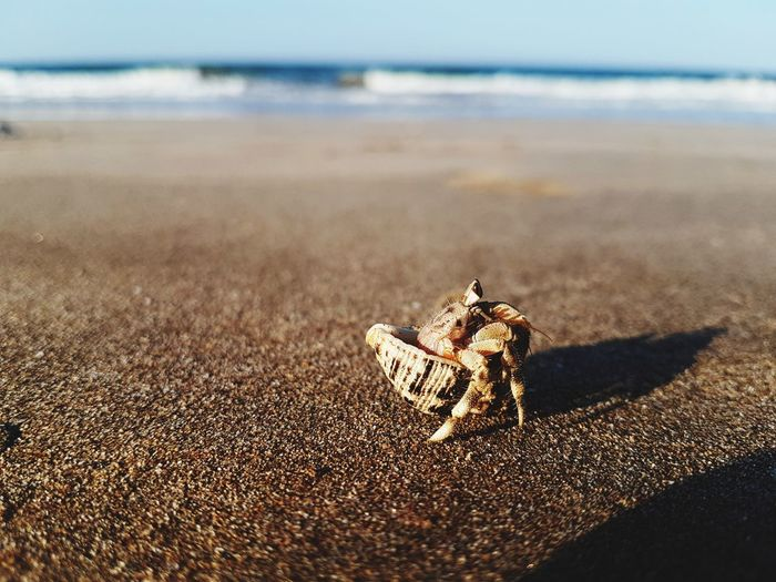 Close-up of hermit crab on beach