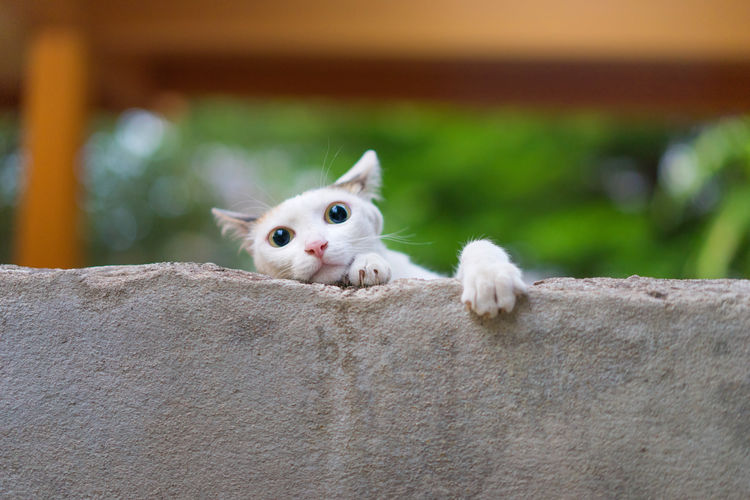 Climb up on the wall Adventure Capture The Moment Cat Cat Lovers Cats Climb Climbing Climbing A Mountain Cute Pets Domestic Animals Domestic Cat Eye4photography  EyeEm Best Shots Hi! One Animal Pampered Pets Pet Photography  Pets Pets Corner Trying Something New Wall Young Animal Streetphotography Minimalism Fresh on Market 2016 Pet Portraits