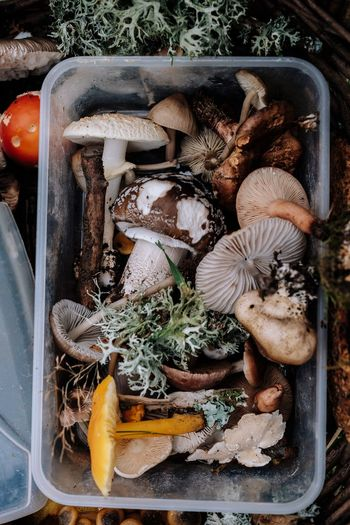 Close-Up Of Mushrooms In Container