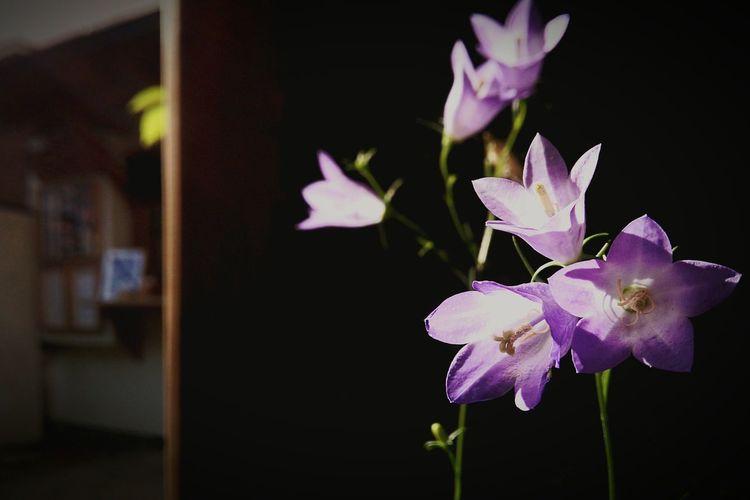 僕だけが知っていること Only I know. Spring Flowers Flowers Hello World
