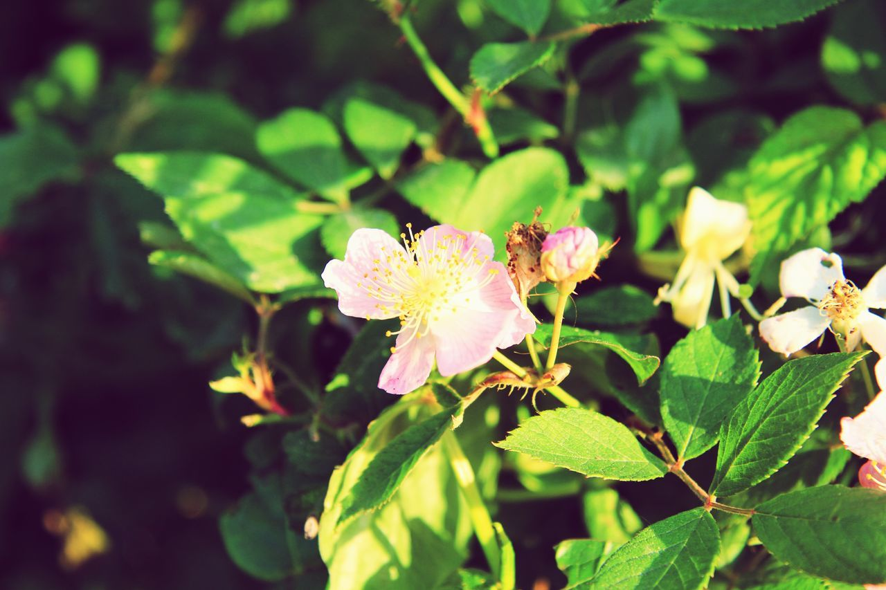 flower, growth, nature, fragility, petal, beauty in nature, leaf, plant, freshness, green color, flower head, outdoors, day, no people, close-up, blooming