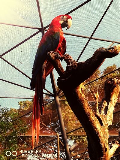Animal Themes One Animal Red Paraba Red Color Birdcage Beauty In Nature Zoophotography Zoo Animals  Animals In Captivity Protection Animals In The Wild Photograph Domestic Animals Animal Representation Parrot Summer Fragility