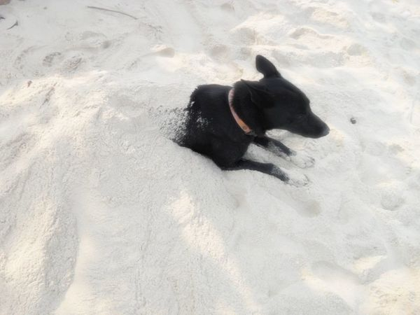 :) Relaxing Beach Dog Vsocam