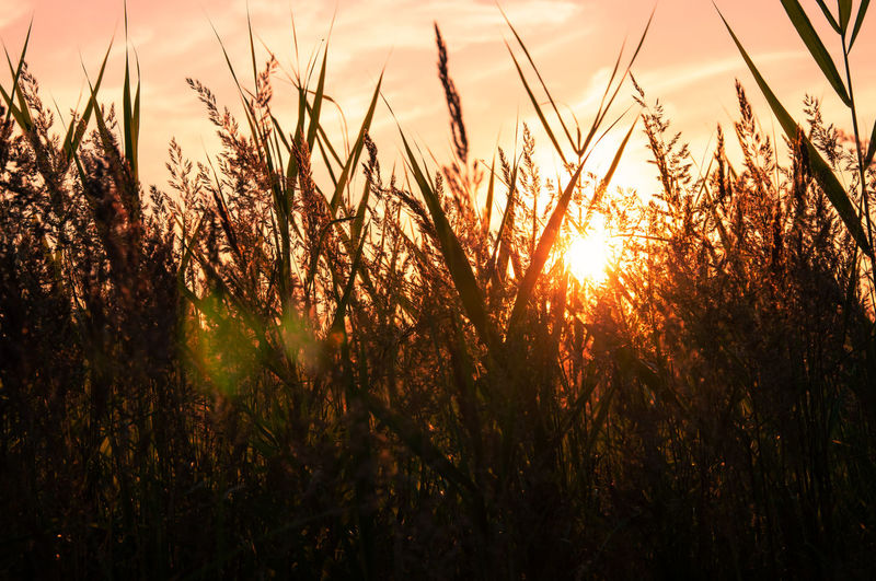 Grass Orange Orange Sky Orange Sun Orange Sunset Sonnenuntergang Sunset_collection Werne A.d. Lippe Beauty In Nature Beauty In Nature Field Grass Landscape Nature No People Orange Color Outdoors Sky Sun Sunbeam Sundown Sunlight Sunset Tranquil Scene Tranquility
