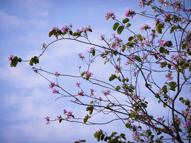 Blooming flowers Tree Flower Branch Springtime Blossom Sky In Bloom Plant Life Blooming Petal Botany