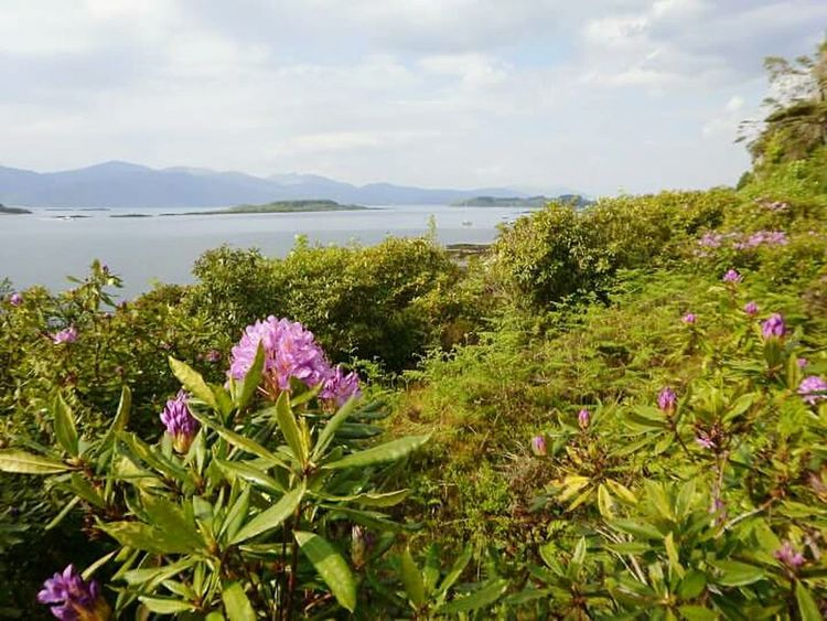 2010, Port Appin Flower Water Scotland Scottish Highlands Summer Time  Freshness Port Appin