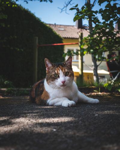 Portrait of cat sitting on sidewalk in city