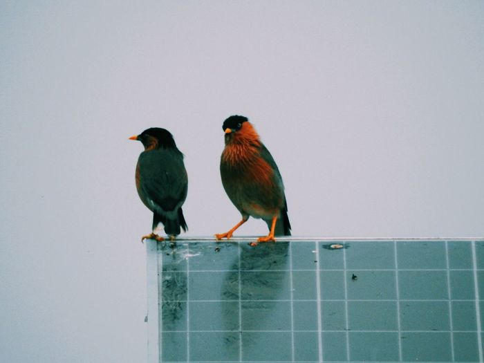 Low angle view of birds perching on solar panels against sky