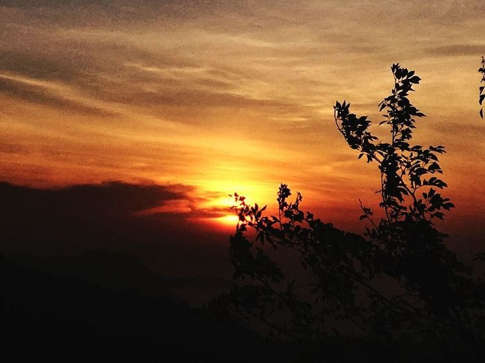 With a high standard🌅 Tree Scenics Cloud - Sky Freshness Sunrise And Clouds