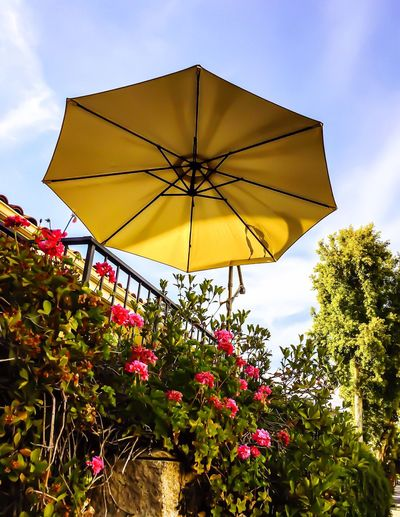 Outdoor patio umbrella like a flying saucer Flower Low Angle View Growth Day Yellow Nature Outdoors No People Fragility Close-up UFO Sightings Abstract Photography Concept Patio Umbrella Surreal Design Reality Is The Only Word In The Language That Should Always Be Used In Quotes Flying Saucer Suspended In Time Suspend Suspend Belief Break The Mold The Architect - 2017 EyeEm Awards Place Of Heart EyeEm Awards 2017