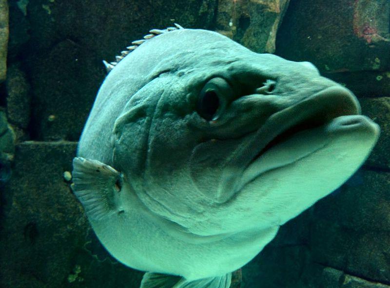 Fish Sea Sealife Aquarium Sealifeaquarium