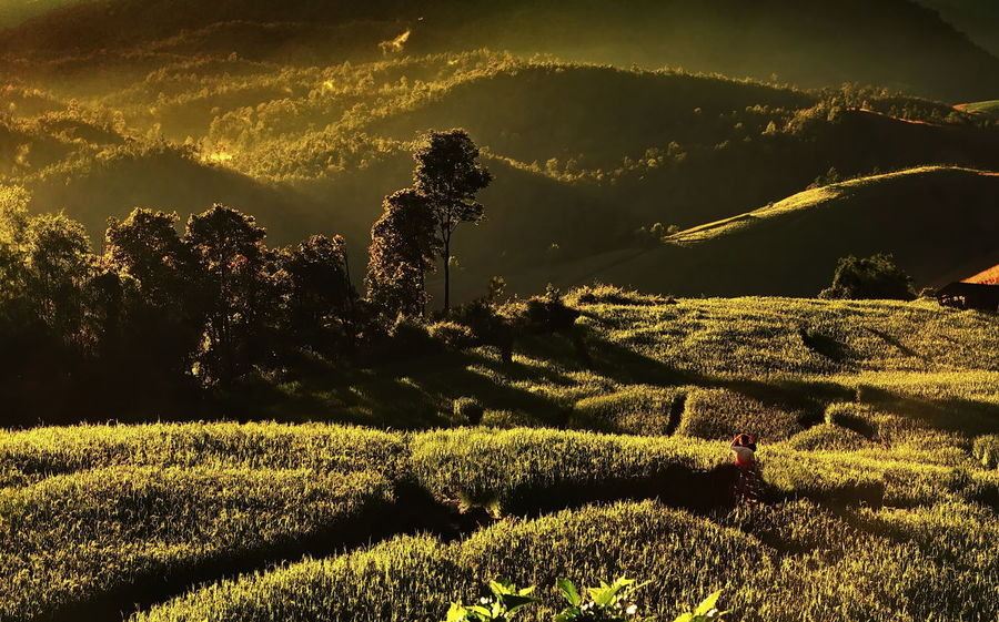 Early Morning At Rice Field . Agriculture Beauty In Nature Day Early Morning Landscape Mountain Nature Outdoors Rural Scene Scenics Village