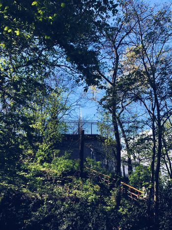 Tree Day No People Low Angle View Nature Built Structure Forest Outdoors Branch Architecture Beauty In Nature Sky Bunker Flakturm Berlin Berliner Ansichten Berlin Photography Springtime Spring WWll Neighborhood Map The Architect - 2017 EyeEm Awards