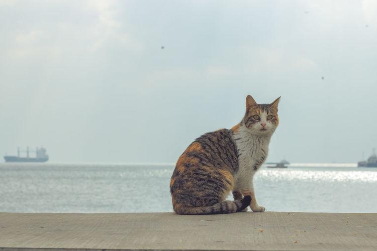 Cat sitting on a sea