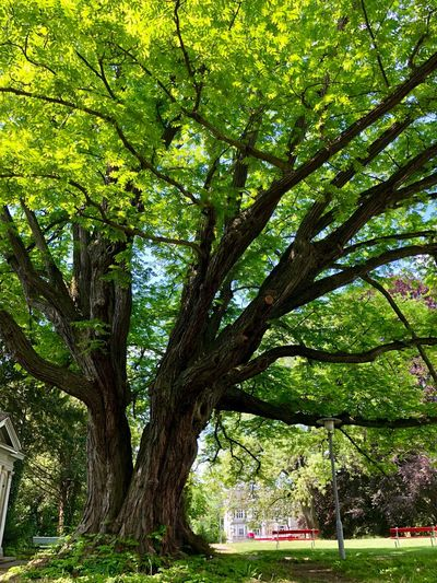 Tree in the park Tree Plant Growth Green Color Nature Trunk No People Branch Outdoors Beauty In Nature Park Sunlight Tree Trunk Low Angle View