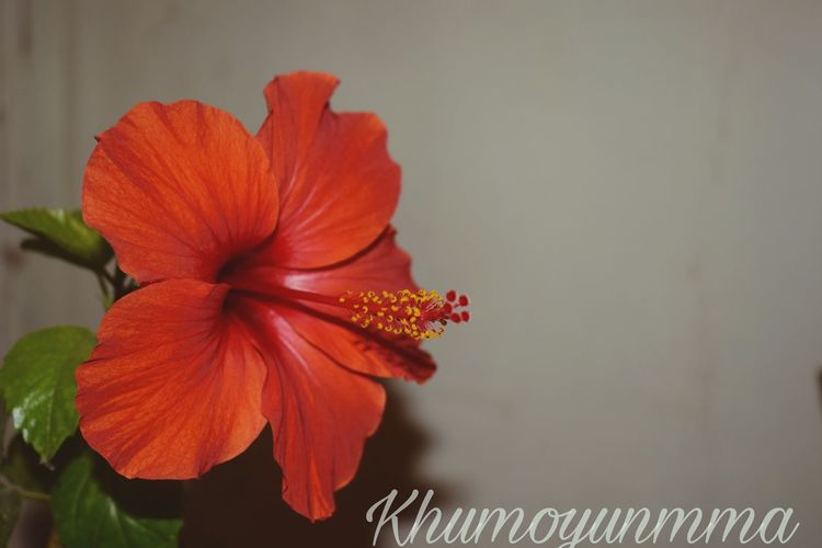 Flower Red Day Nature Khumoyunmma Uzbek Akkurgan Gullar First Eyeem Photo