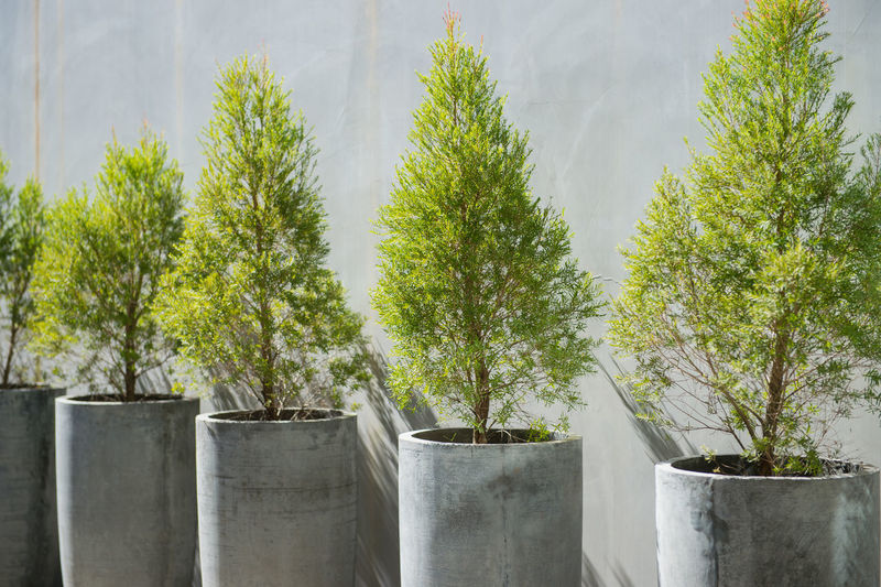 Cement Close-up Day Design Greenhouse Growth Nature No People Outdoors Plant Potted Plant Sky Tranquility Tree