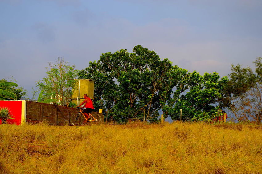 Bike riding on a golden morning Gold Happy People Trees Biker Bycicle Excercise Gold Colored Grassy Joy Ride