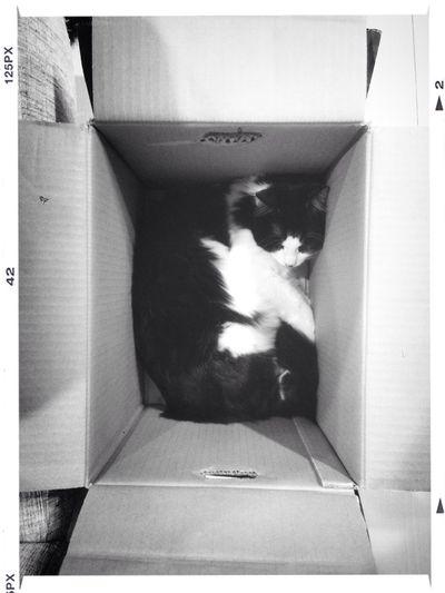 Neko Cat Nyaon Black And White