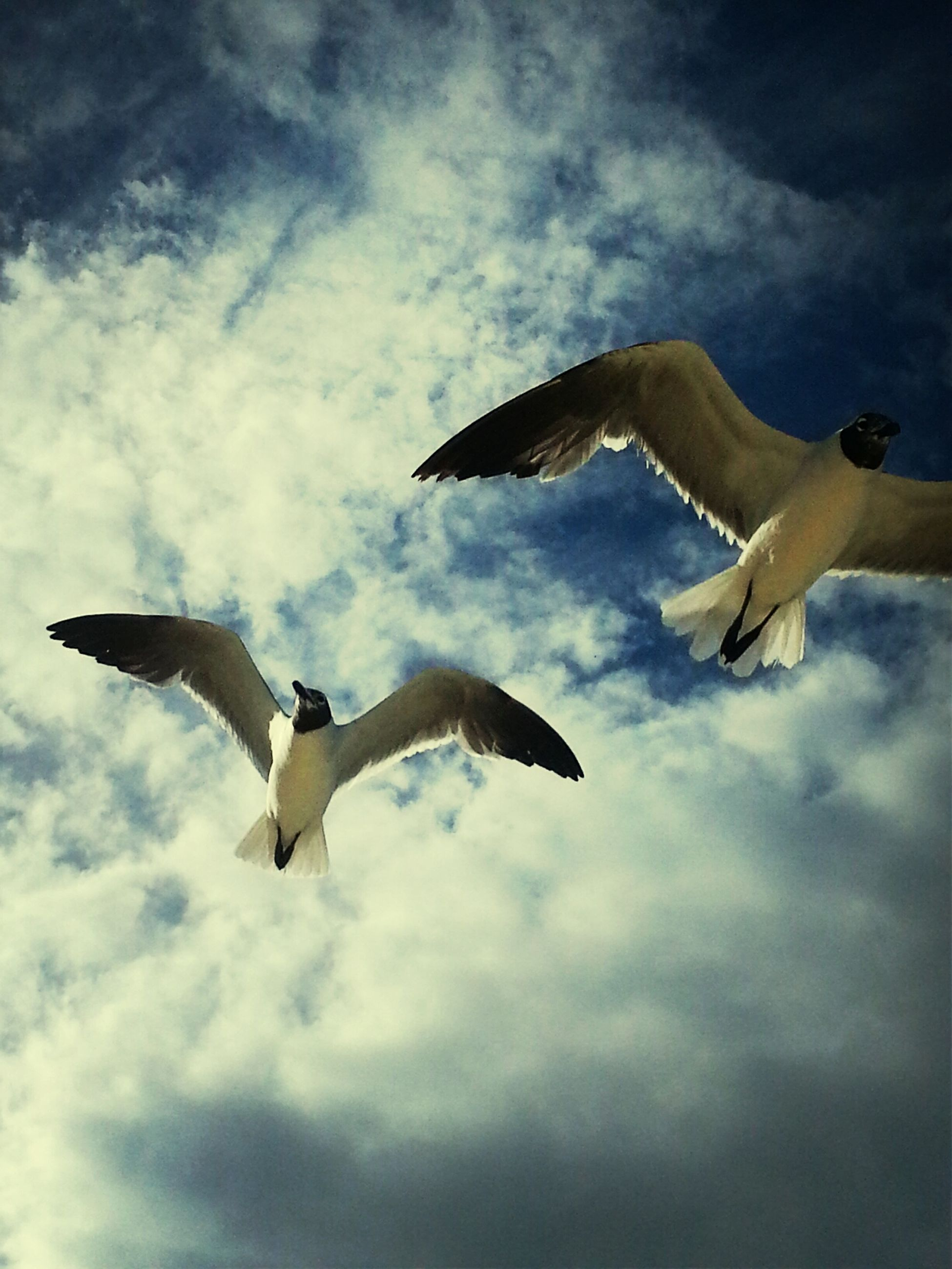 low angle view, sky, flying, cloud - sky, mid-air, cloudy, cloud, spread wings, bird, animal themes, freedom, seagull, blue, day, nature, outdoors, motion, wildlife, animals in the wild, full length