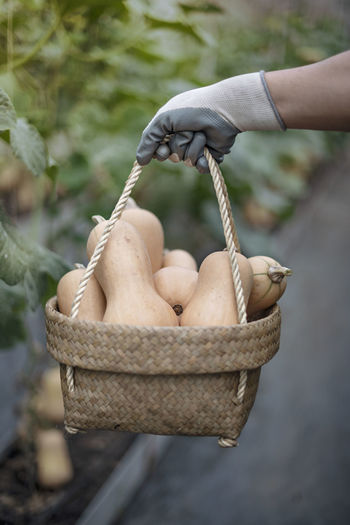 Close-up of hand holding squashes in basket