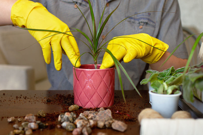 Midsection of man planting plant into pot on table