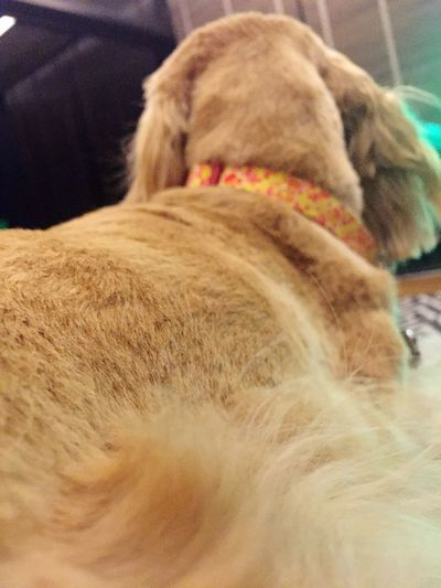 Domestic Animals Mammal One Animal Animal Themes Pets Dog Indoors  No People Close-up NewAngle Diferent Perspective EyeEmNewHere