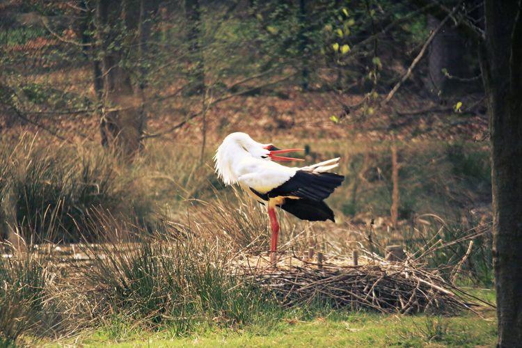 Stork perching on field