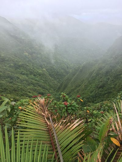Dominica Beauty In Nature Day Fog Green Color Growth Landscape Mountain Nature No People Outdoors Plant Scenics Sky Tranquil Scene Tranquility Tree