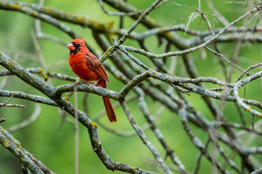 No People Nature Bird Squirrel Nature Cardinal