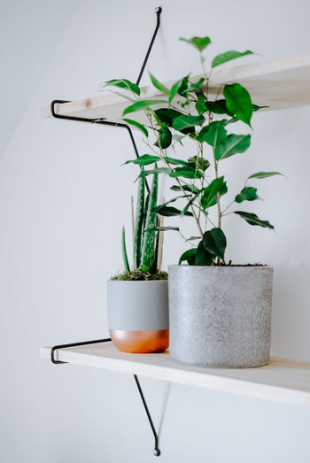 Close-up of potted plant on table at home