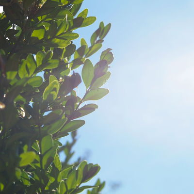 Beautiful Green Leafs Beauty In Nature Blue Blue Sky Bluesky Branch Clear Sky Close-up Day Fragility Green Color Growth Leaf Light Sky Low Angle View Nature Niceday No People Outdoors Plant Plant Part Sky Sunlight