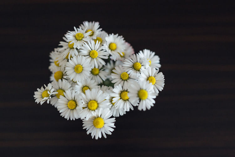 Flower Flowering Plant Freshness Fragility Vulnerability  Studio Shot Black Background Plant Flower Head Close-up Inflorescence Petal Beauty In Nature Indoors  Yellow Daisy White Color Nature No People Growth Pollen Flower Arrangement Directly Above White