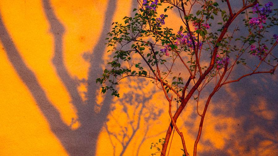 日日行行步道旁,人人匆匆路途忙,春来一色好阳光,正照花影上白墙。 sunset Beauty In Nature Tree Sunlight Flower Sunset Outdoors Evening Shadow