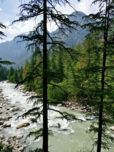 The beautiful Parvati river flowing in all its glory. Kasol, Himachal Pradesh, India. Nature Sky Tree No People Mountain Beauty In Nature Hmalayas Wilderness Scenics River River View Valley View Valley Kasol Himachalpradesh India The Great Outdoors - 2017 EyeEm Awards The Great Outdoors - 2017 EyeEm Awards Lost In The Landscape