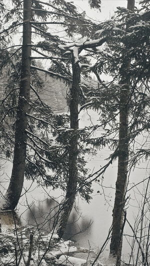 Nature Outdoors Tree Beauty In Nature Ownphotos Pine Snowing Landscape Holiday VSCO November Jalkala Cloud - Sky Winter Scenics Forest Snow Lake Ice
