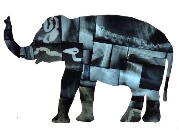 Elephant sell art art collection swiss