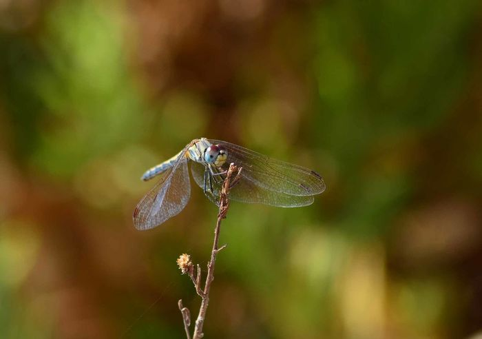 Animal Wing Beauty In Nature Close-up Day Dragonfly Green Green Color Nature No People Outdoors Perching Tranquility Wing Winged