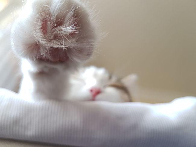 Millennial Pink Cat's Dream Cat's Hand