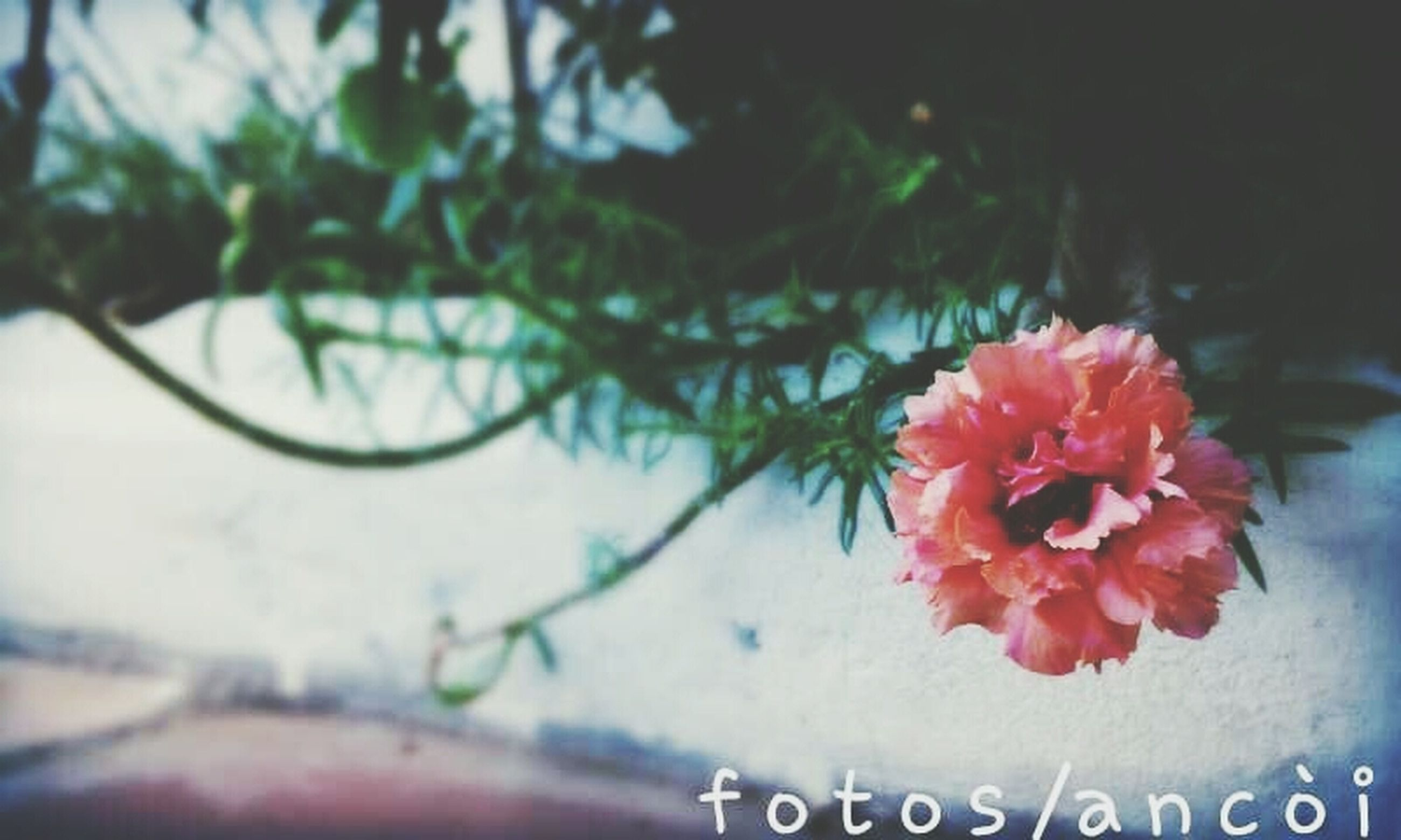 flower, focus on foreground, close-up, tree, text, red, growth, nature, plant, branch, freshness, beauty in nature, day, no people, selective focus, western script, fragility, leaf, outdoors, pink color