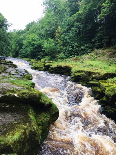 Tree Forest Nature River No People Beauty In Nature Outdoors Green Color Tranquility Day Tranquil Scene Waterfall Scenics Water Landscape Sky Yorkshire Dales Travel Destinations The Strid