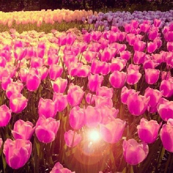 Herkese Mutlu  Saglikli Huzurlu günlerr..... Bu arada sinav adina dua eden herkese çok tesekkürler .... Sinavim gerçekten çok güzel geçti.. :)))