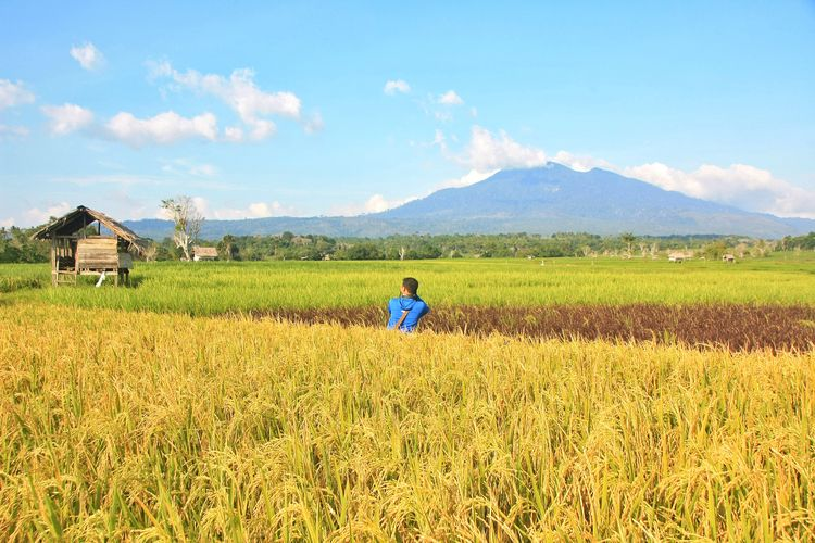 Rear view of man on agricultural field against sky
