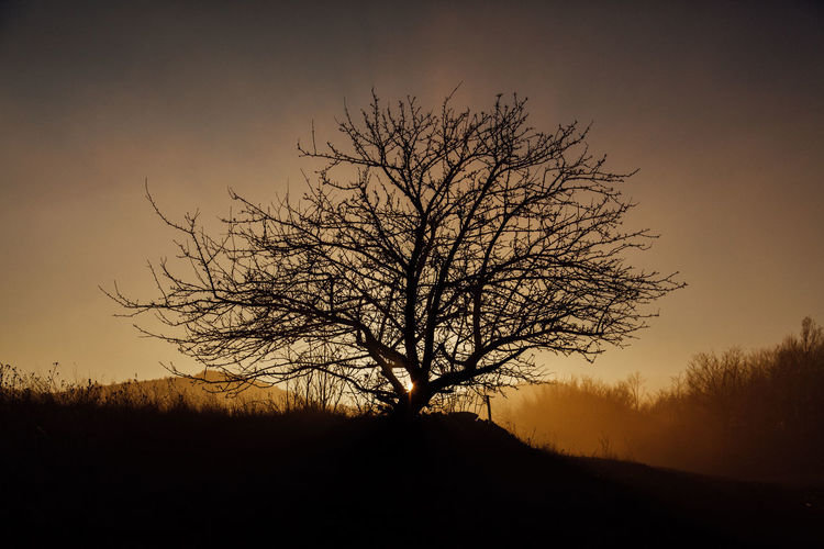 Silhouette of the tree in sunset Tree Bare Tree Silhouette Environment Tranquility Nature Scenics - Nature Beauty In Nature Landscape Sunset Branch Dusk Field Outdoors Nature EyeEm Nature Lover Mountain Serbia
