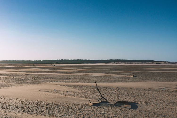 Exploring the river delta over Parnaiba. Arid Climate Blue Branch Clear Sky Day Desert Dry Horizon Over Land Landscape Minimalism Nature No People Outdoors Sand Sand Dune Sky Sun Textured  Tranquil Scene Tranquility Travel Travel Destinations Traveling Wind Wood The Great Outdoors - 2017 EyeEm Awards EyeEmNewHere EyeEm Selects Going Remote The Great Outdoors - 2018 EyeEm Awards A New Perspective On Life