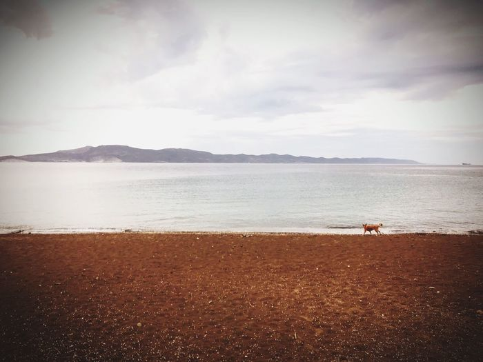 Walking the dog Water Beach Sea Land Sky Cloud - Sky Beauty In Nature Tranquility Scenics - Nature Sand Outdoors Horizon Over Water First Eyeem Photo EyeEmNewHere