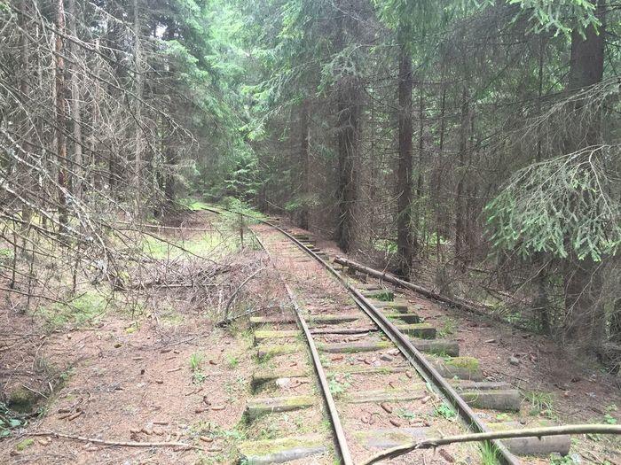 Train Tracks Abandoned Train Tracks Train Forest Trees Summer Discovering Romania Covasna Mocanita