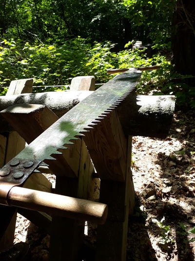 Outdoors Day No People Sunlight Nature Tree Forest Wald Bock Sägen Zugsäge Hochzeitsbrauch Wedding Rituals Trunk Log Trim Saw Pit Saw Saw Old Close-up Nature